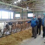 Amerikai tanácsadás a vajdasági tehénfarmokon