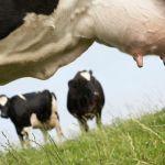 Szakmai tanácsadói nap tejhasznú szarvasmarha tenyésztők számára